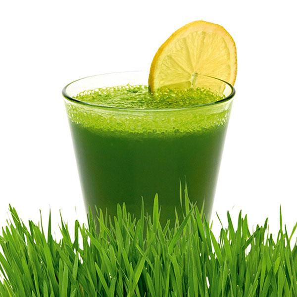 wheatgrass_juice